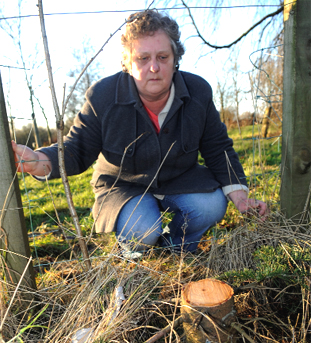UPSET: Monica Varey, whose memorial fir tree to her father, Alfred Cook, has been lopped off and stolen by thieves
