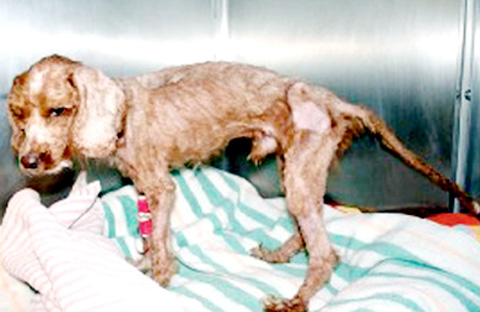 HOME NEEDED But too many animals are being aband-oned, like this neglected pup