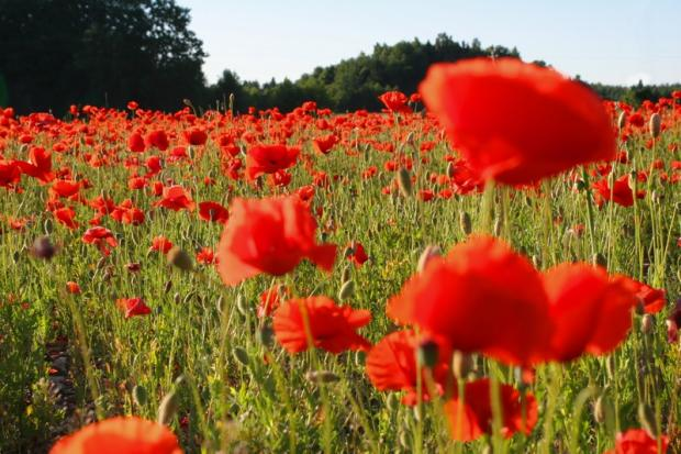 Chorley Citizen: Service to mark centenary of WW1
